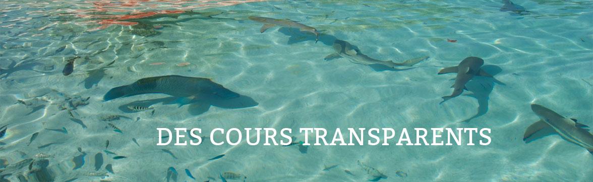 des cours transparents